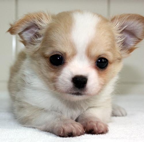 puppy_sample_c01