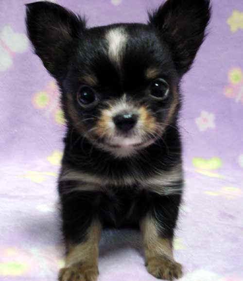 puppy_sample_c02