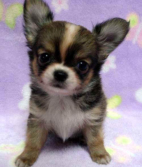puppy_sample_c03