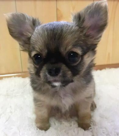 puppy_sample_c04