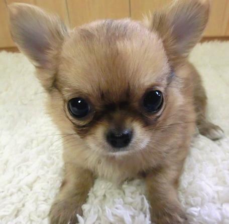 puppy_sample_c05