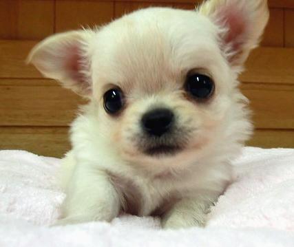 puppy_sample_c06