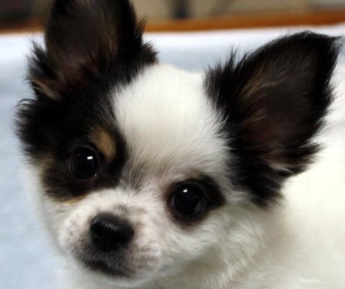 puppy_sample_c08